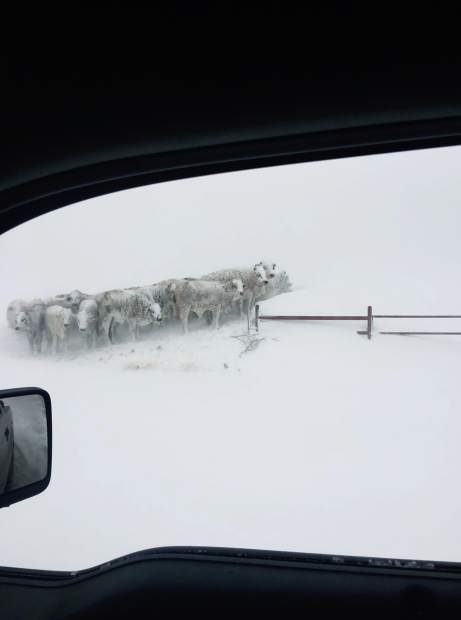 Winter storm Goliath affects cattle producers in Texas, New
