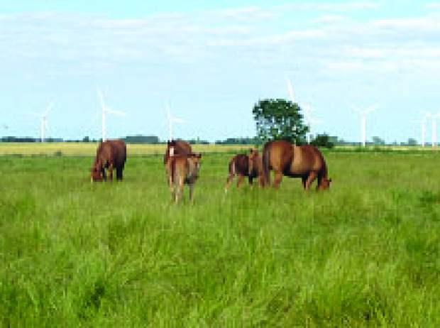 Spaying mares: A method to permanently manage behavior