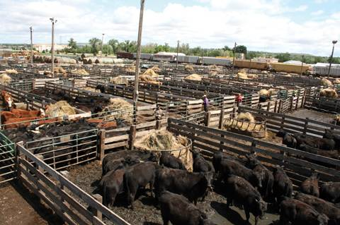 Sale barns are here to stay | TSLN com