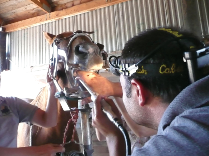 Equine dental care | TSLN com