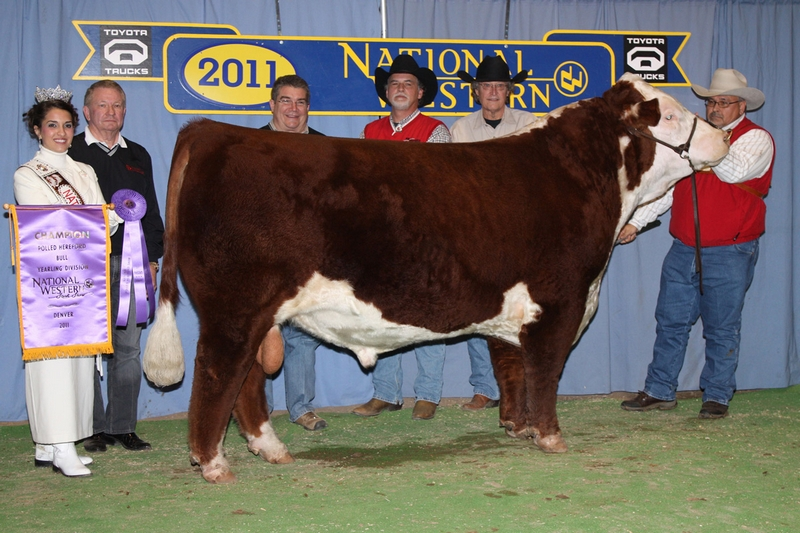 2011 NWSS Hereford show results | TSLN com