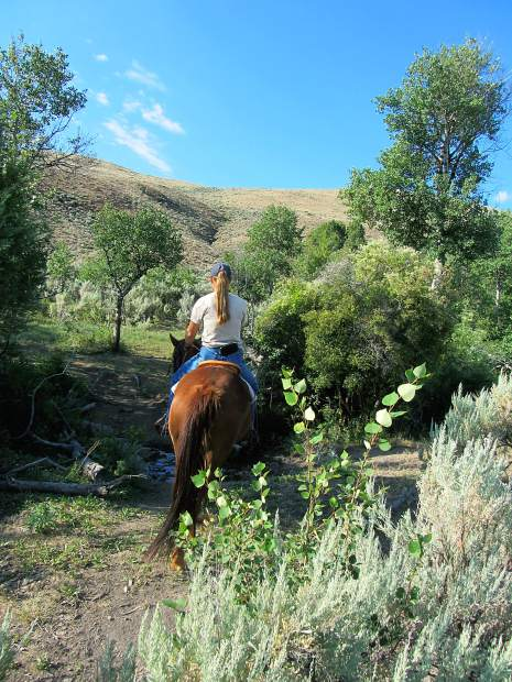 How to deal with ticks on horses, and what health issues to