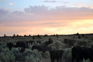 Hope for the Hammonds: Interior Secretary reinstates Oregon family's BLM grazing permit