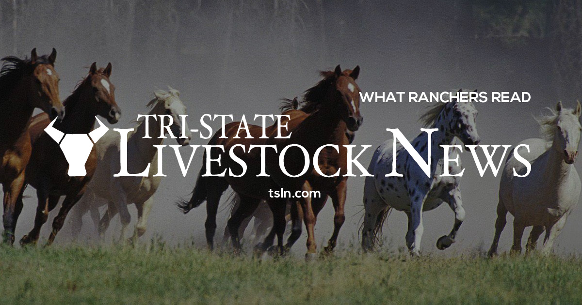 Outside Circle: Horse sales, ranch rodeos, roping, clinics, youth rodeos